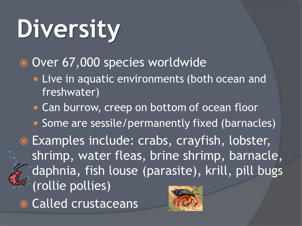 Diversity Over 67,000 species worldwide