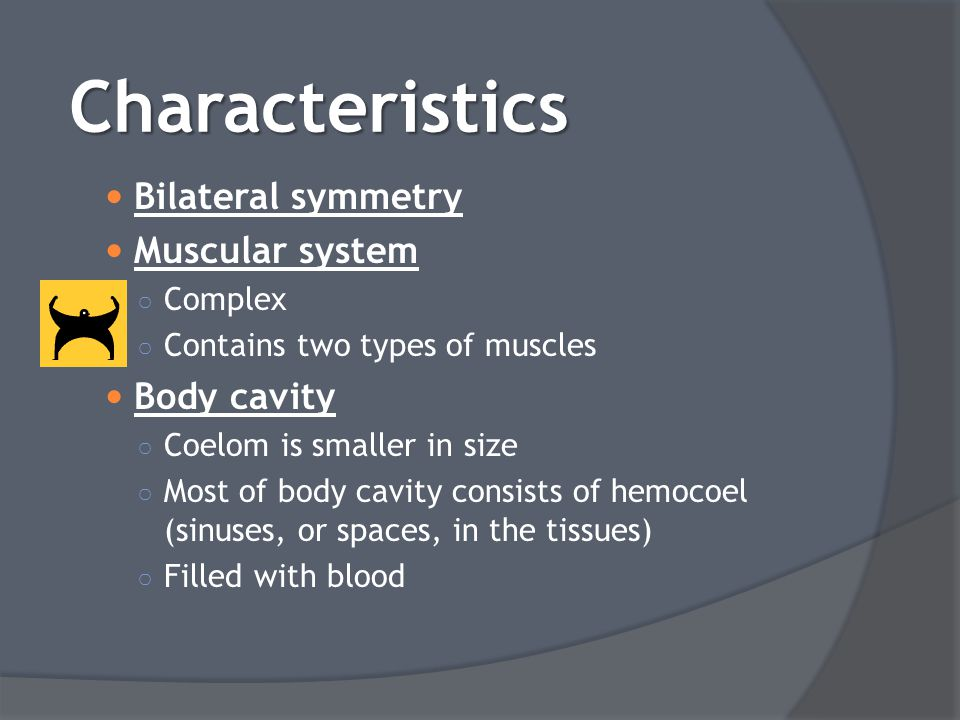 Characteristics Bilateral symmetry Muscular system Body cavity Complex