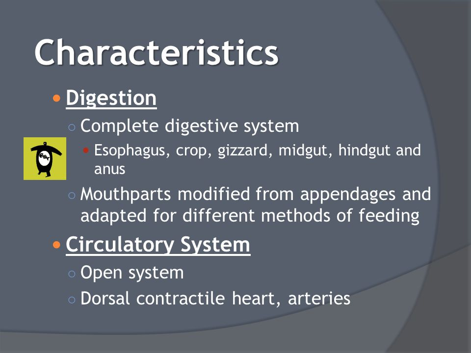 Characteristics Digestion Circulatory System Complete digestive system
