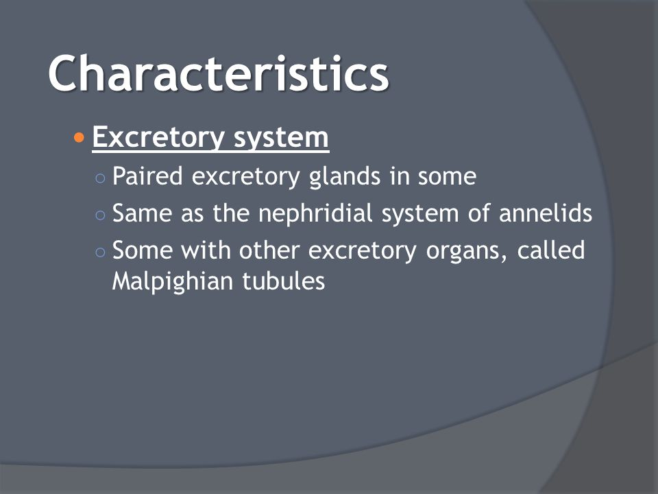 Characteristics Excretory system Paired excretory glands in some