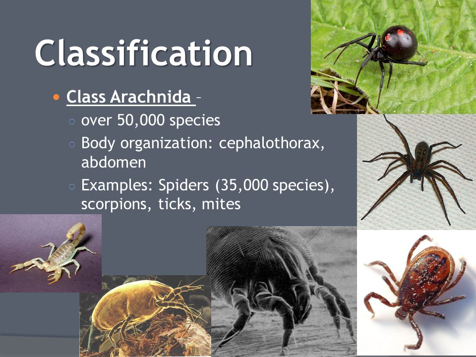 Classification Class Arachnida – over 50,000 species