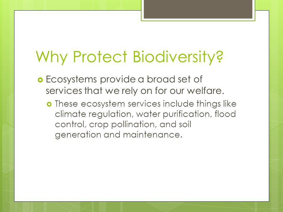 Why Protect Biodiversity