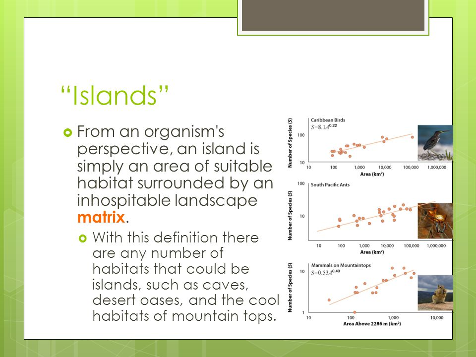 Islands From an organism s perspective, an island is simply an area of suitable habitat surrounded by an inhospitable landscape matrix.