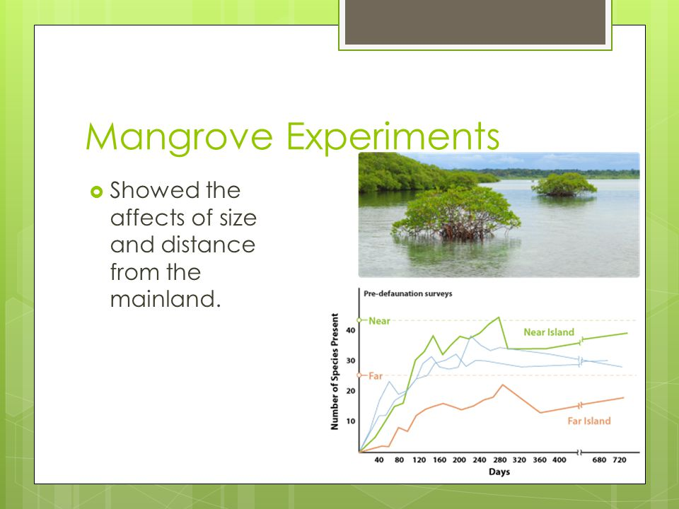 Mangrove Experiments Showed the affects of size and distance from the mainland.