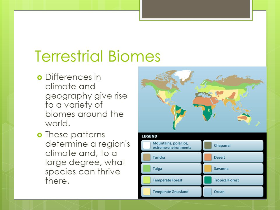 Terrestrial Biomes Differences in climate and geography give rise to a variety of biomes around the world.