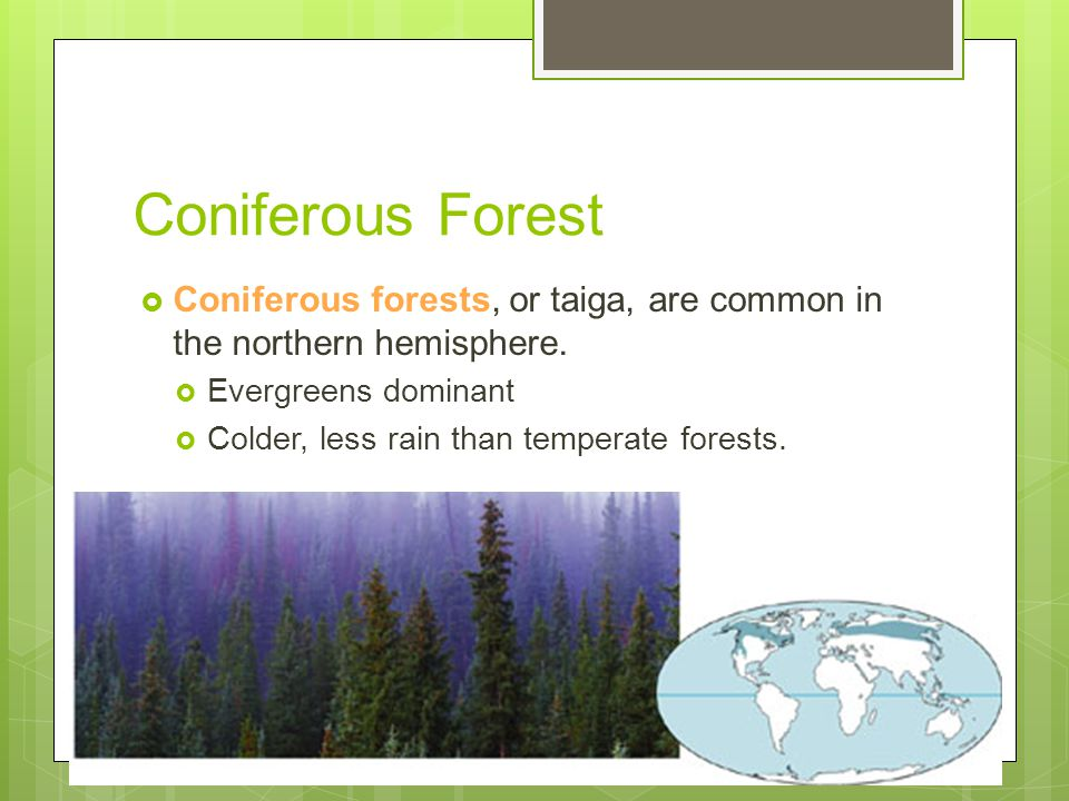 Coniferous Forest Coniferous forests, or taiga, are common in the northern hemisphere. Evergreens dominant.