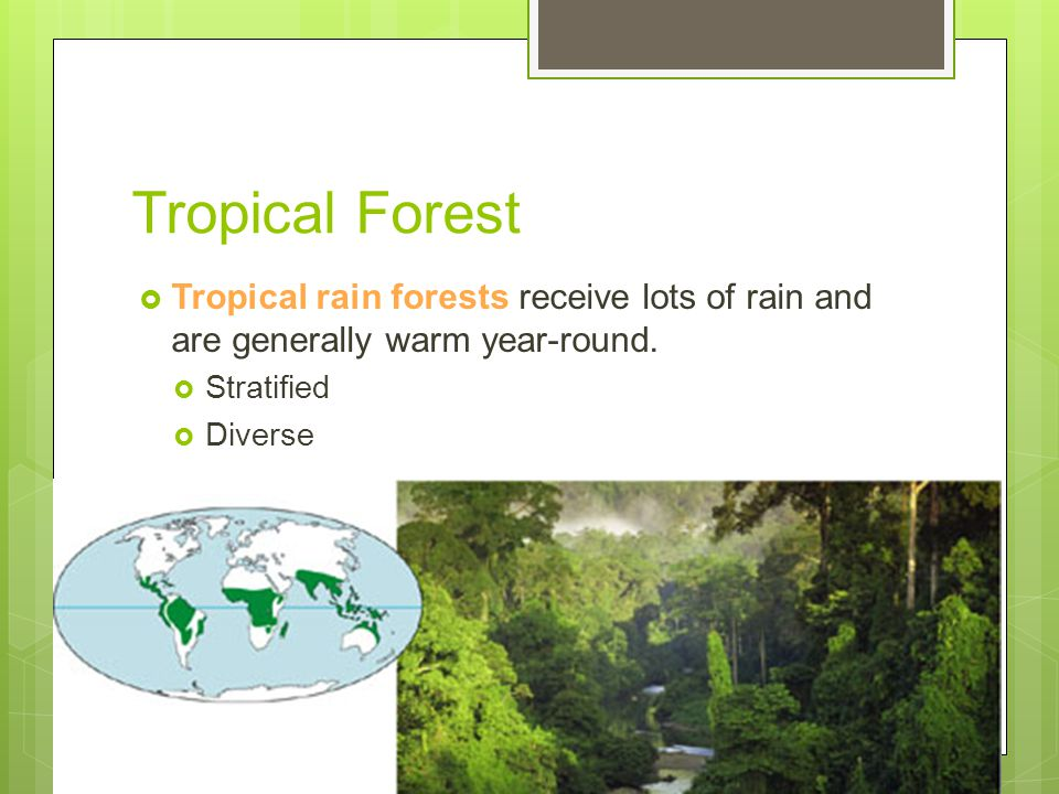 Tropical Forest Tropical rain forests receive lots of rain and are generally warm year-round. Stratified.