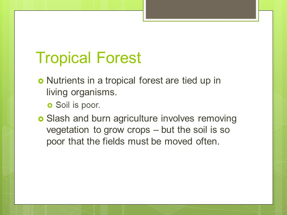 Tropical Forest Nutrients in a tropical forest are tied up in living organisms. Soil is poor.