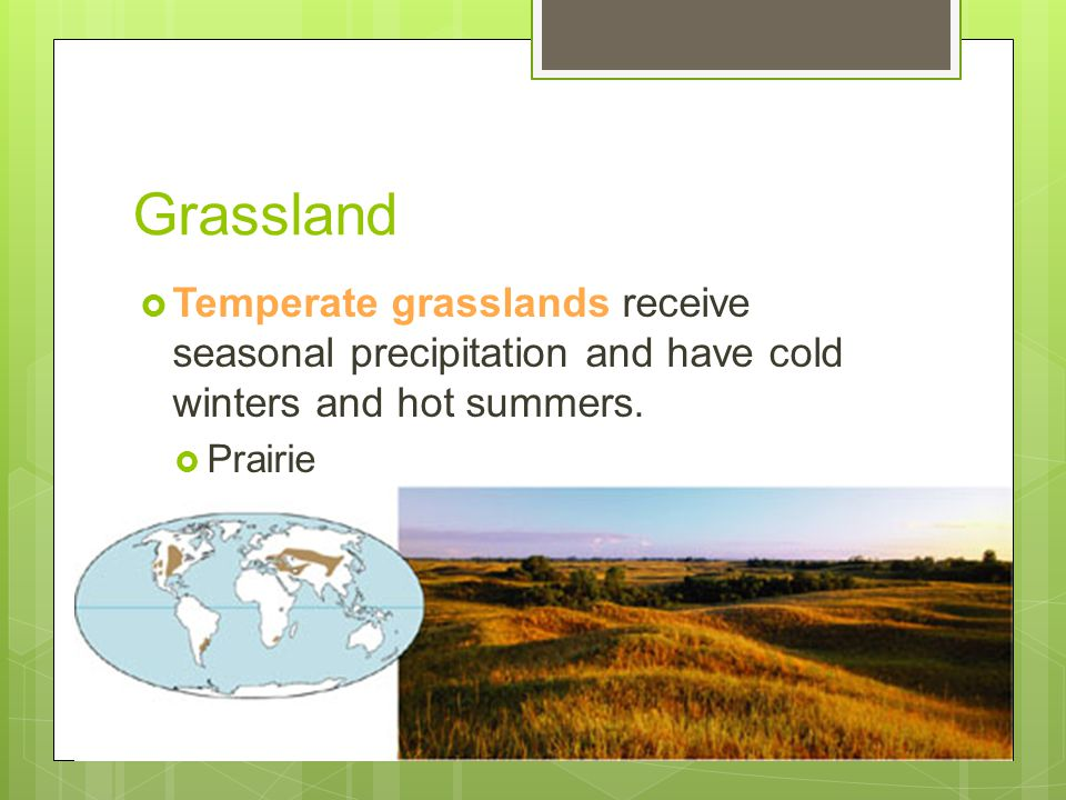 Grassland Temperate grasslands receive seasonal precipitation and have cold winters and hot summers.