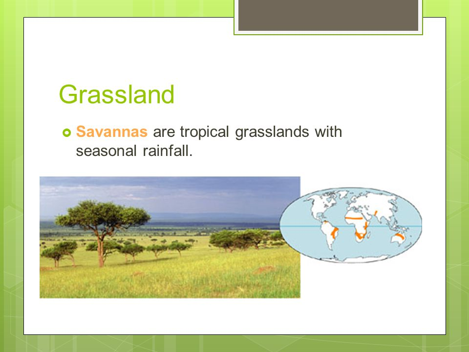 Grassland Savannas are tropical grasslands with seasonal rainfall.
