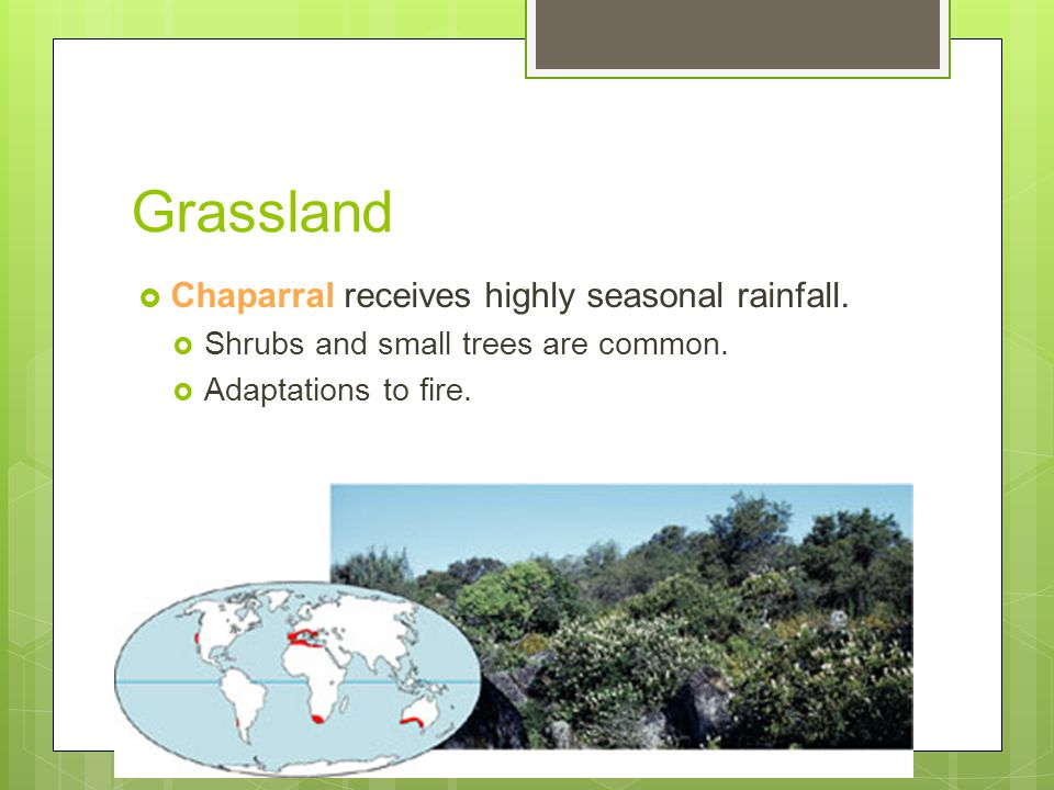 Grassland Chaparral receives highly seasonal rainfall.