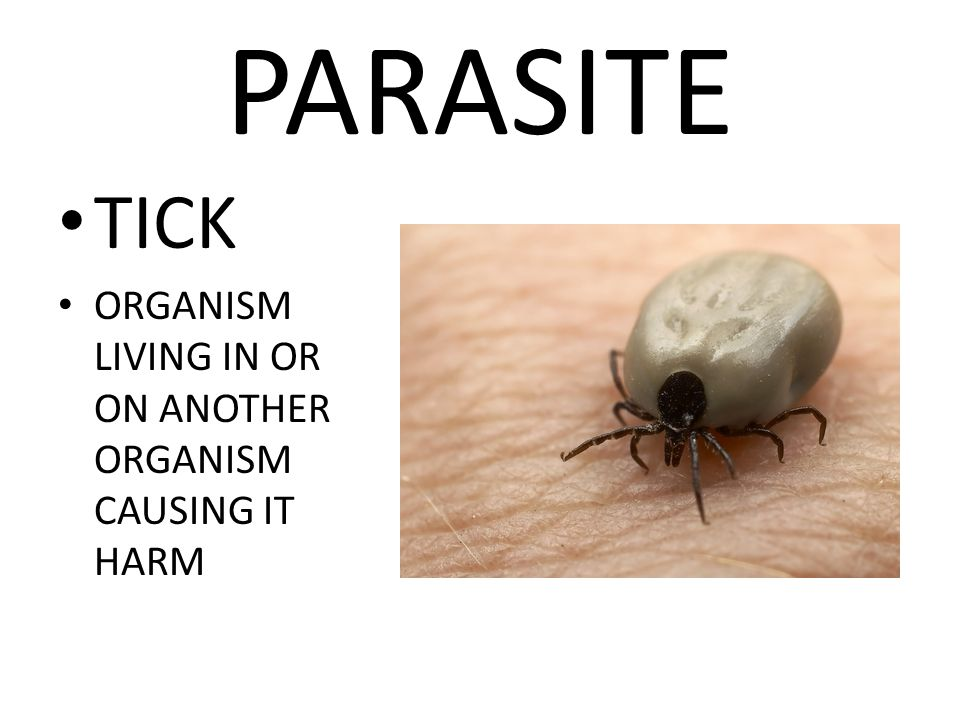 PARASITE TICK ORGANISM LIVING IN OR ON ANOTHER ORGANISM CAUSING IT HARM