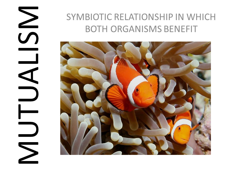 SYMBIOTIC RELATIONSHIP IN WHICH BOTH ORGANISMS BENEFIT