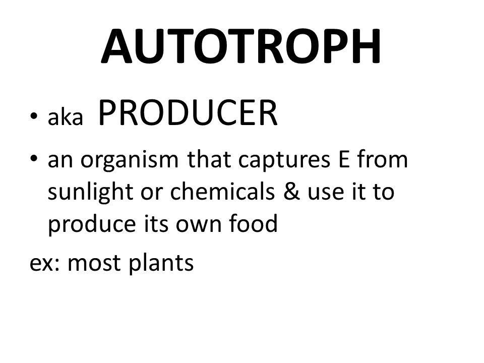 AUTOTROPH aka PRODUCER