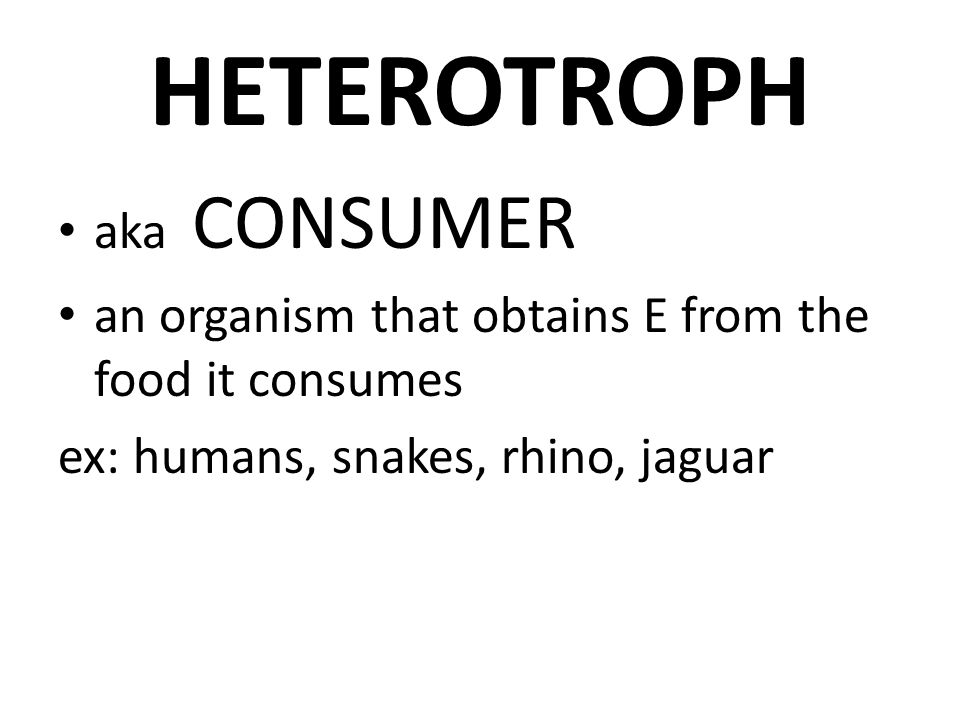 HETEROTROPH aka CONSUMER