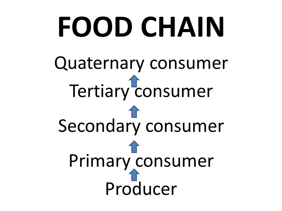 FOOD CHAIN Quaternary consumer Tertiary consumer Secondary consumer
