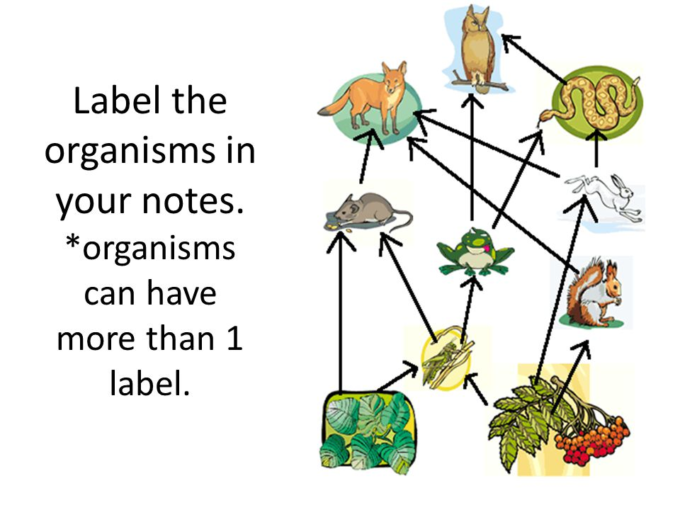 Label the organisms in your notes. *organisms can have more than 1 label.