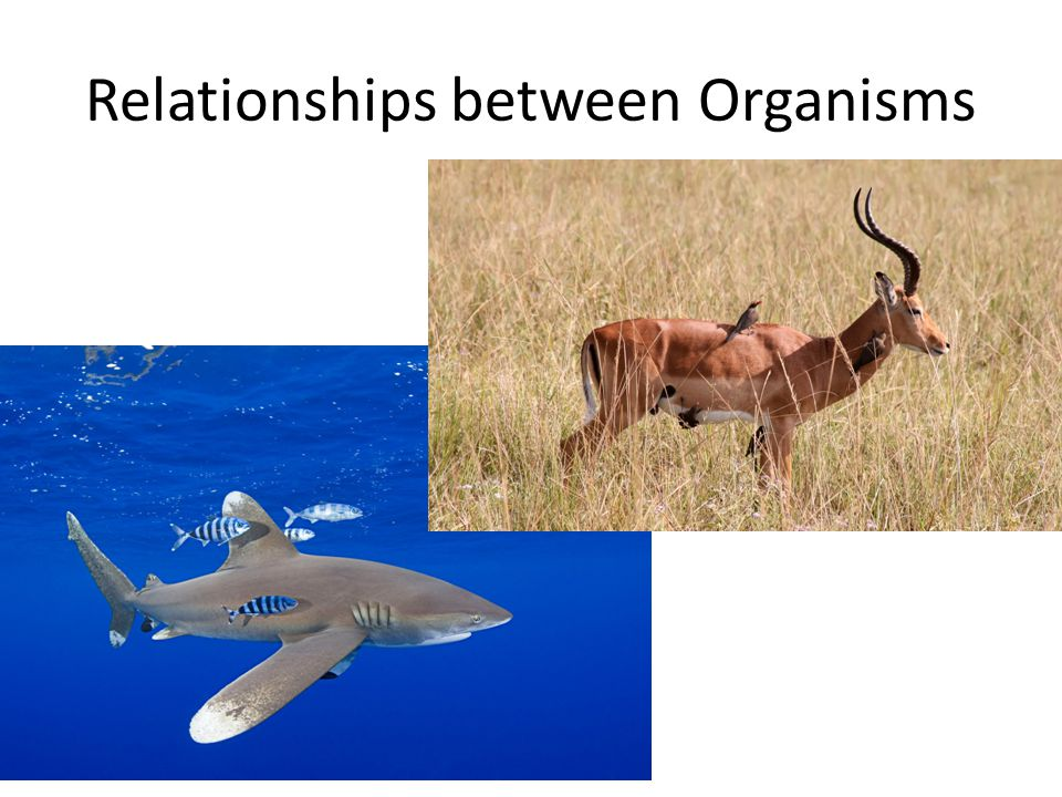 relationship between organisms and environment What is the relationship between predators and prey in an ecosystem what is the relationship between producers and consumers in an ecosystem  among organisms and.