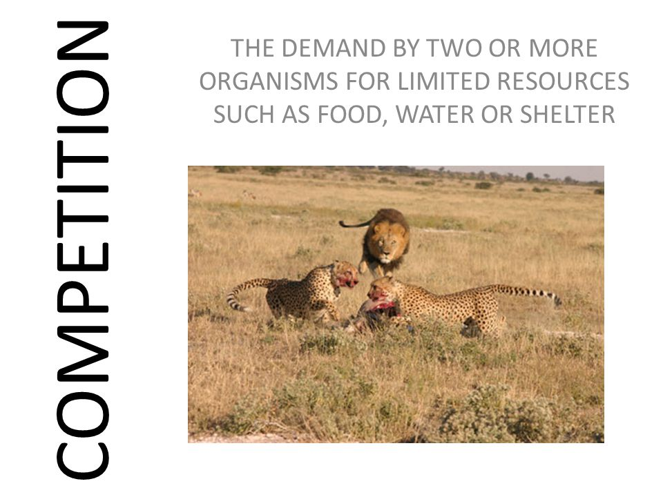 THE DEMAND BY TWO OR MORE ORGANISMS FOR LIMITED RESOURCES SUCH AS FOOD, WATER OR SHELTER