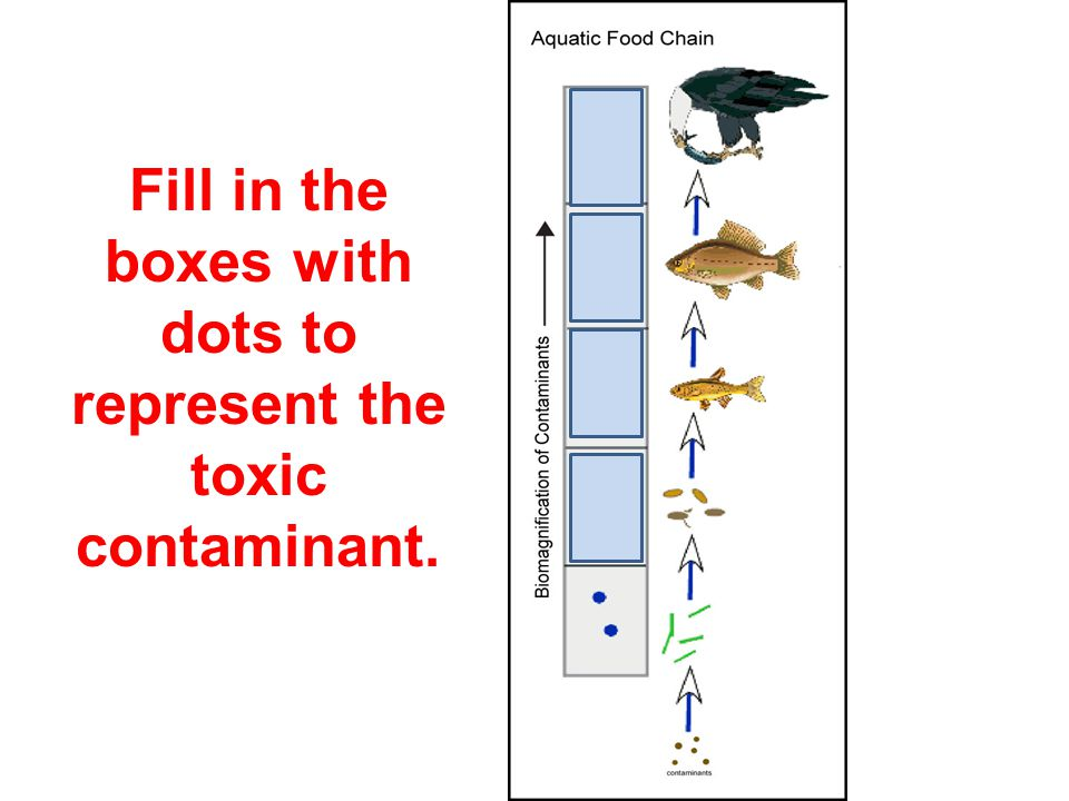 Fill in the boxes with dots to represent the toxic contaminant.