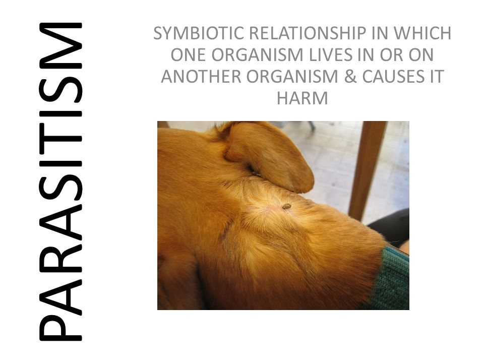 SYMBIOTIC RELATIONSHIP IN WHICH ONE ORGANISM LIVES IN OR ON ANOTHER ORGANISM & CAUSES IT HARM