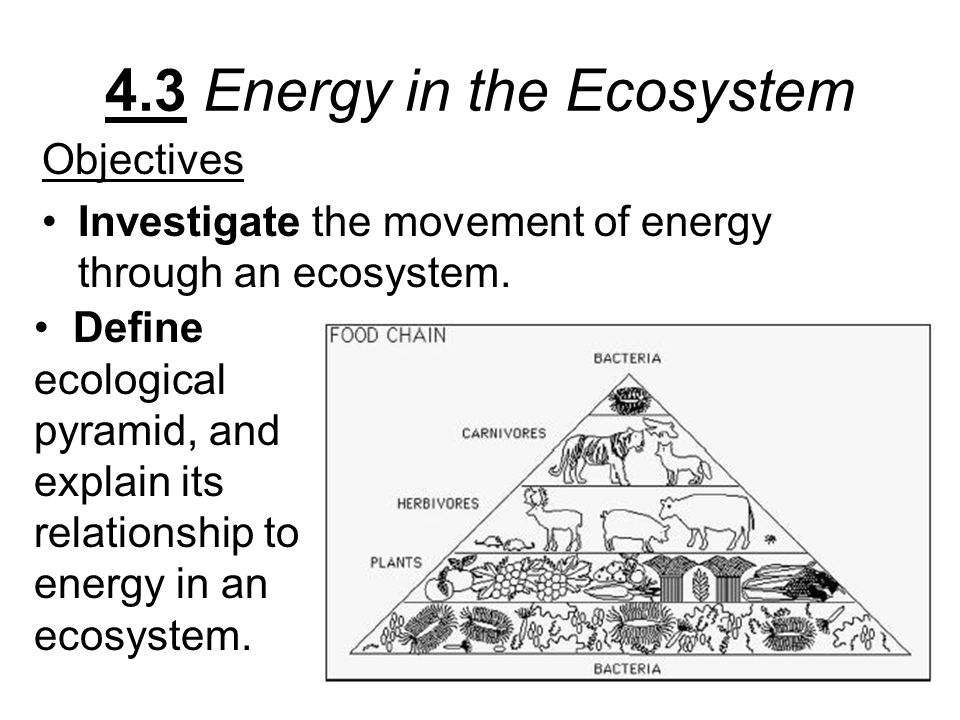 4.3 Energy in the Ecosystem
