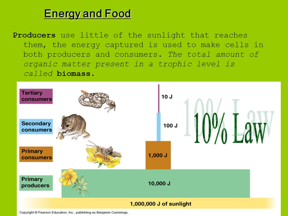 Energy and Food