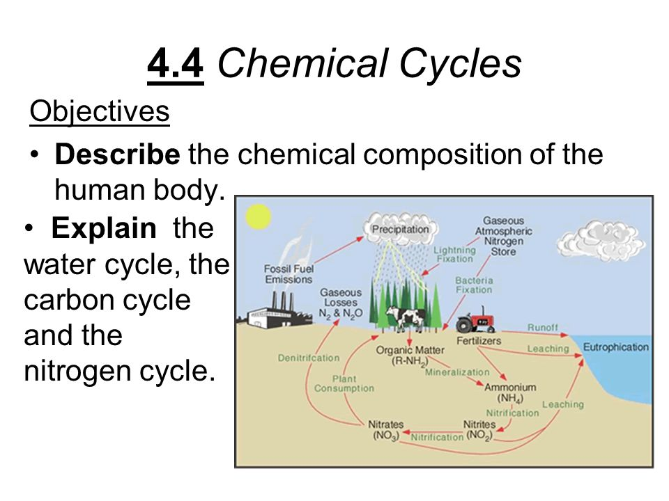 4.4 Chemical Cycles Objectives