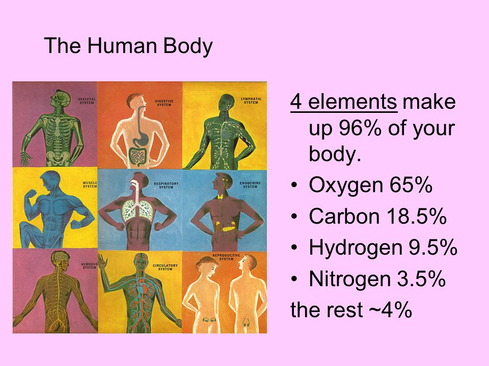 The Human Body 4 elements make up 96% of your body. Oxygen 65% Carbon 18.5% Hydrogen 9.5% Nitrogen 3.5%
