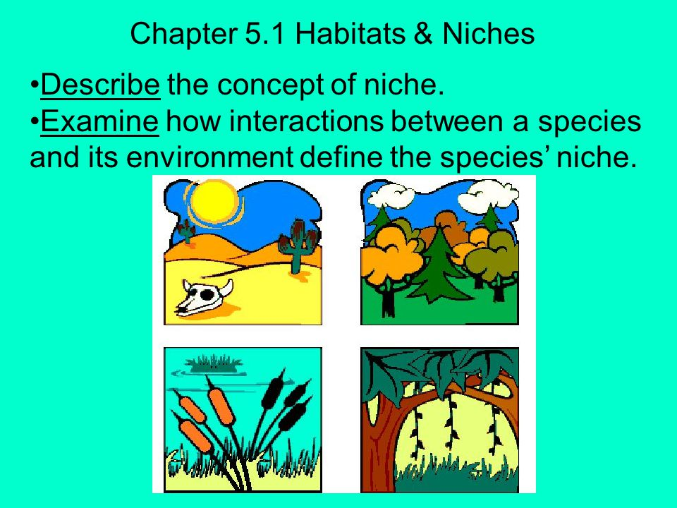 Chapter 5.1 Habitats & Niches
