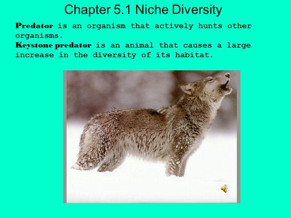 Chapter 5.1 Niche Diversity