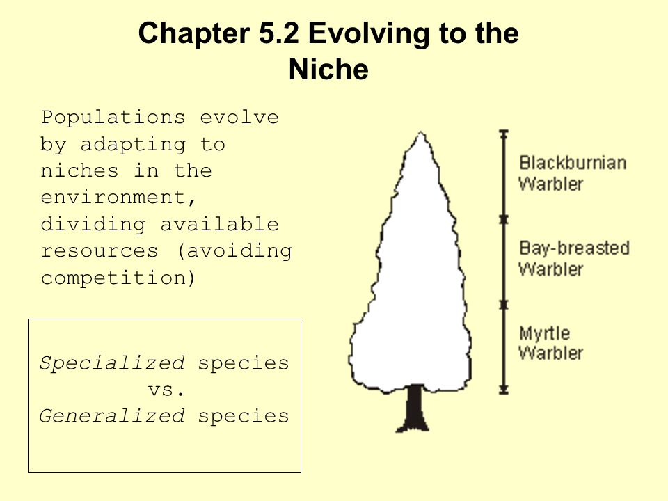 Chapter 5.2 Evolving to the Niche