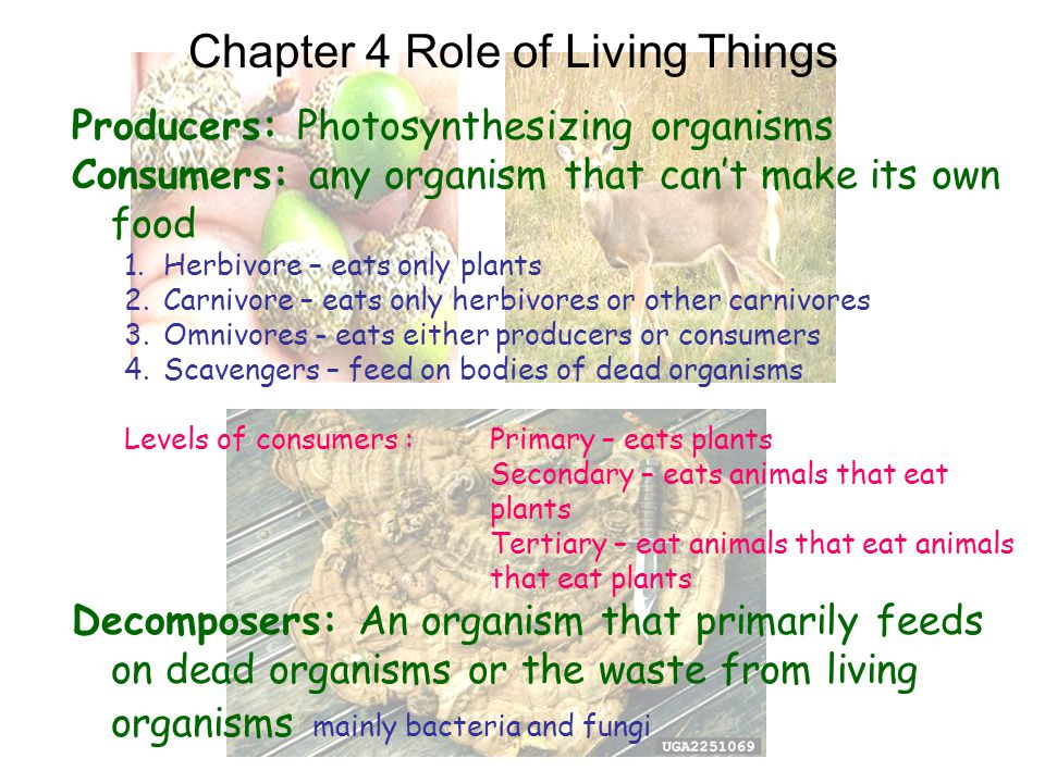 Chapter 4 Role of Living Things