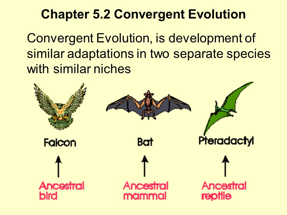 Chapter 5.2 Convergent Evolution