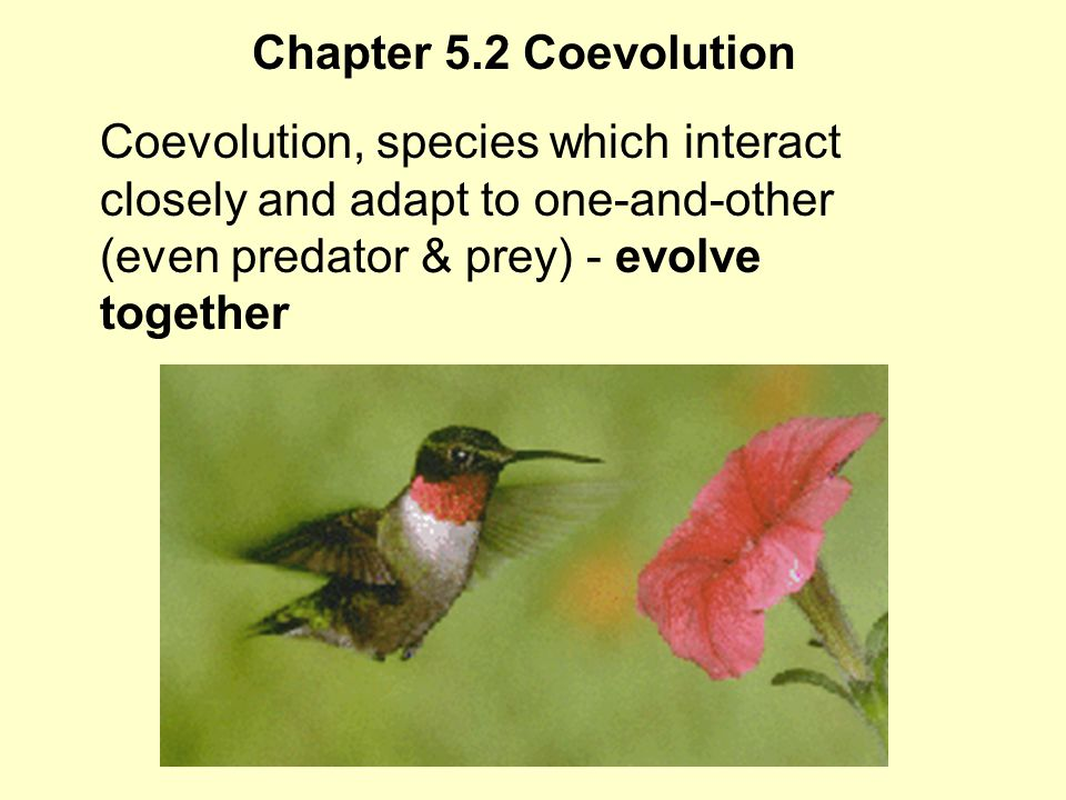 Chapter 5.2 Coevolution Coevolution, species which interact closely and adapt to one-and-other (even predator & prey) - evolve together.