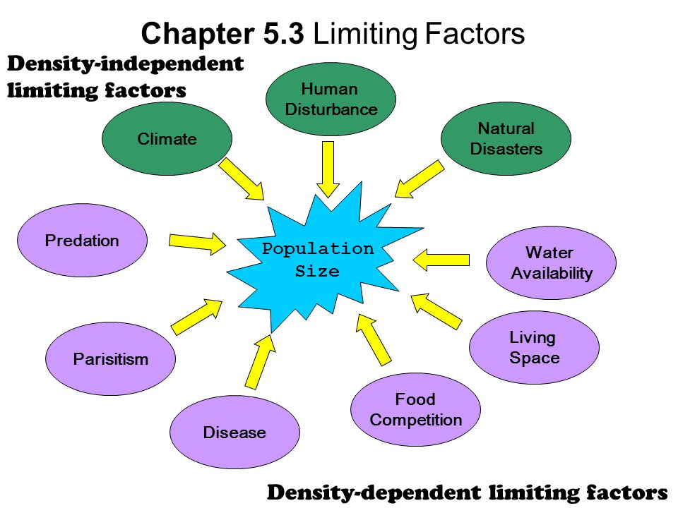 Chapter 5.3 Limiting Factors