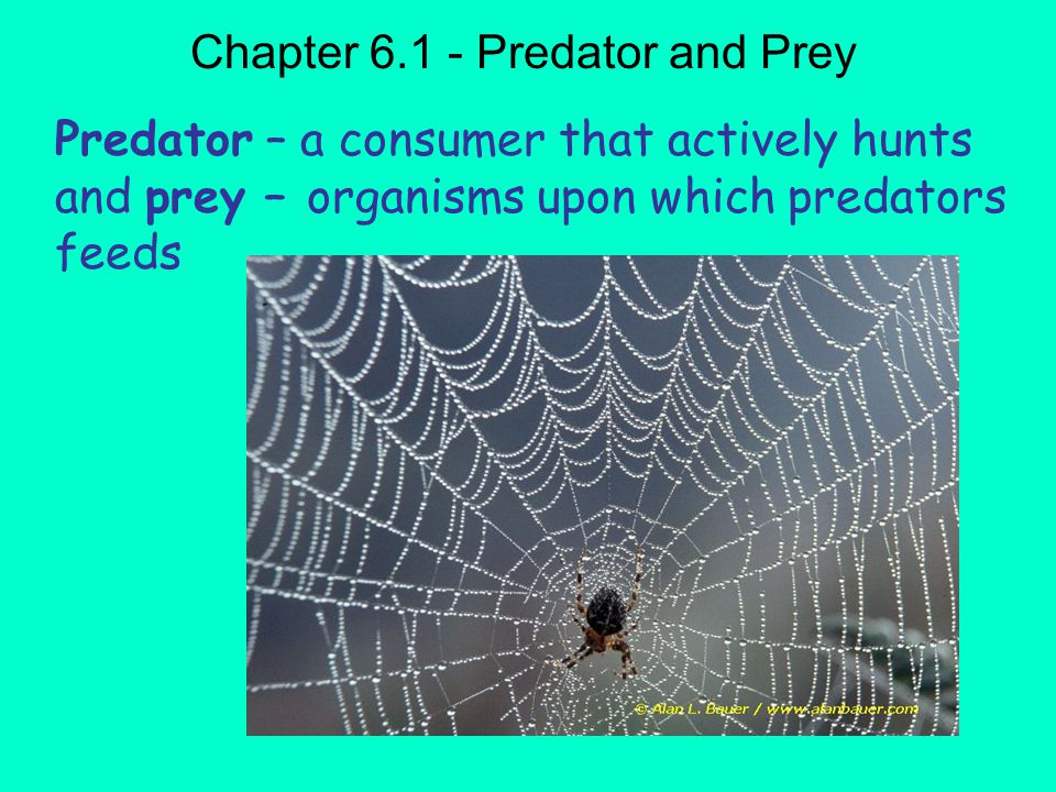 Chapter 6.1 - Predator and Prey