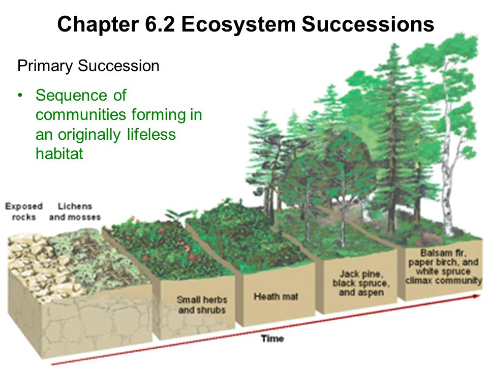 Chapter 6.2 Ecosystem Successions