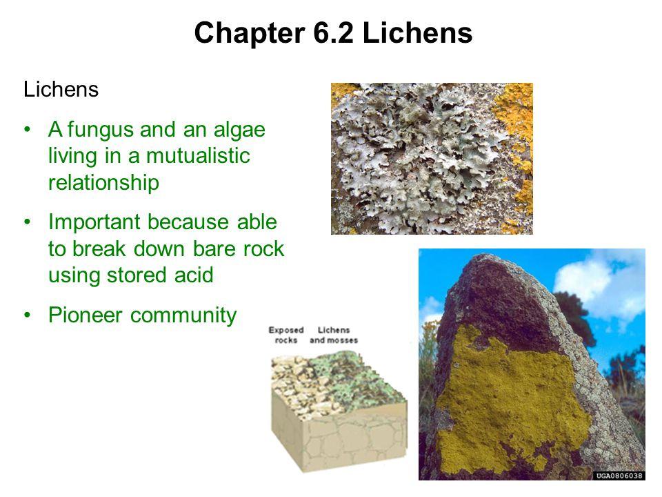 Chapter 6.2 Lichens Lichens