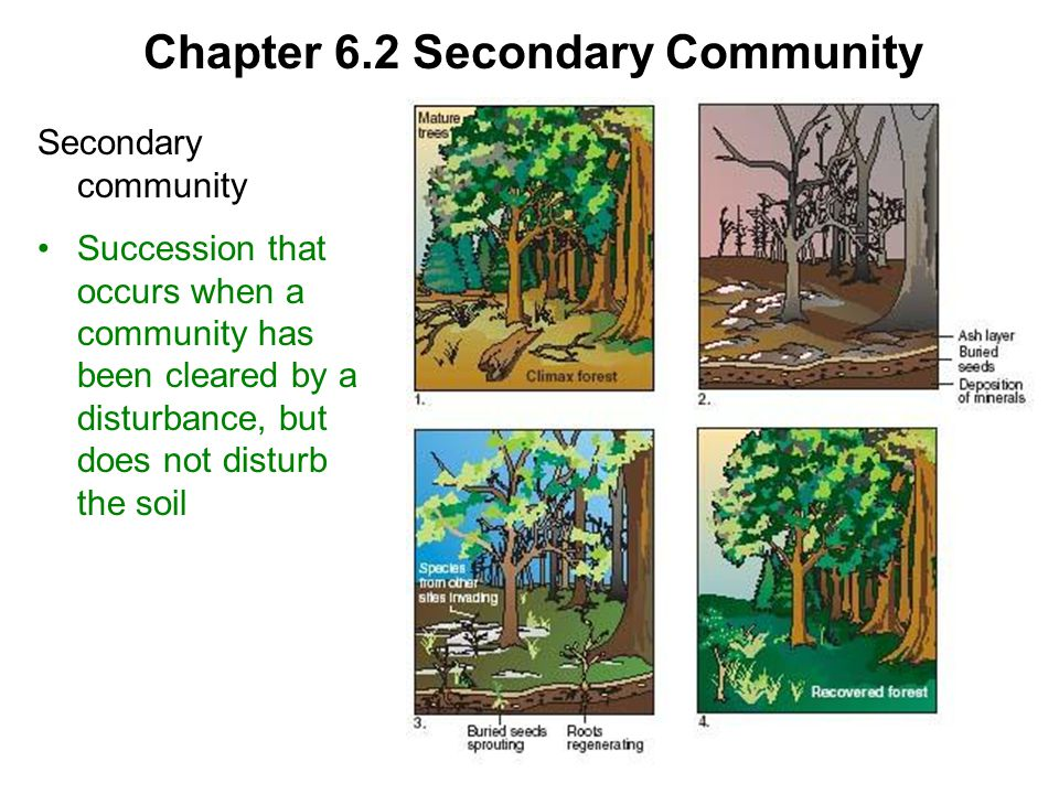 Chapter 6.2 Secondary Community