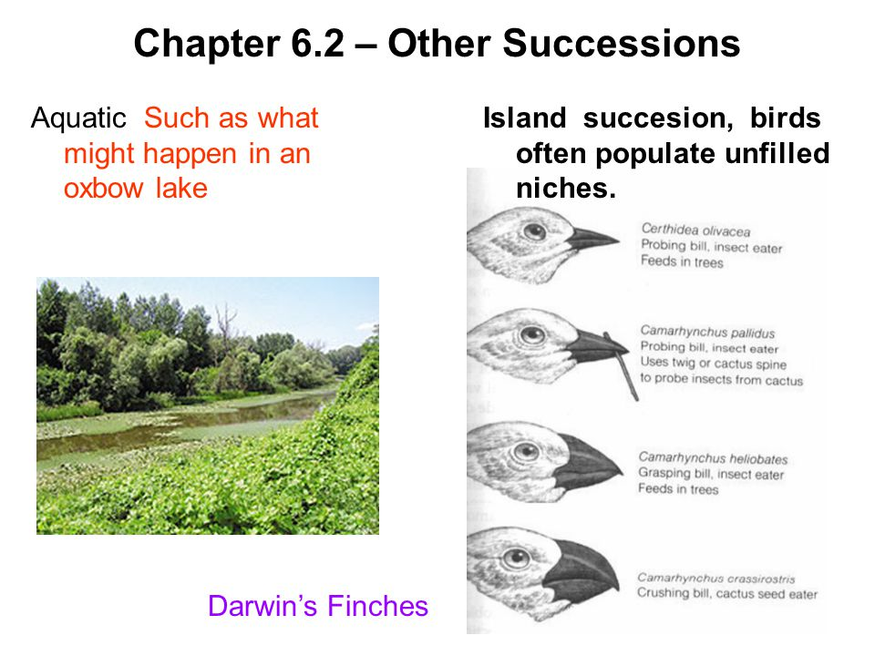 Chapter 6.2 – Other Successions