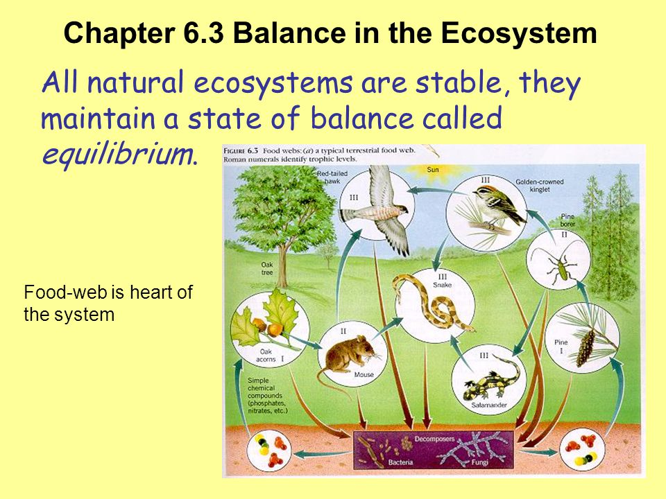 Chapter 6.3 Balance in the Ecosystem