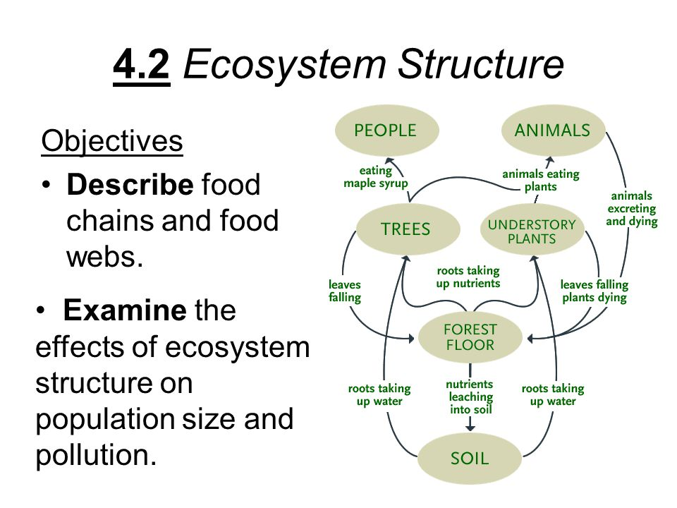 4.2 Ecosystem Structure Objectives Describe food chains and food webs.