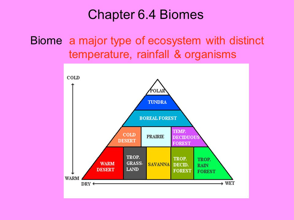 Chapter 6.4 Biomes Biome a major type of ecosystem with distinct temperature, rainfall & organisms