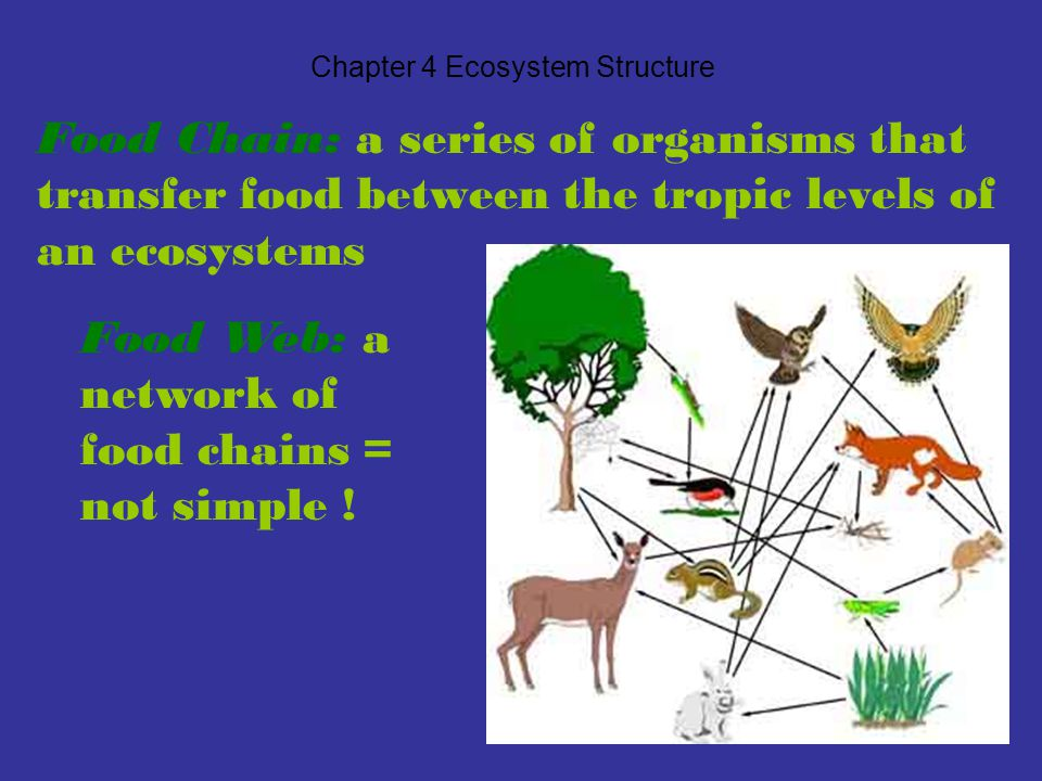 Chapter 4 Ecosystem Structure