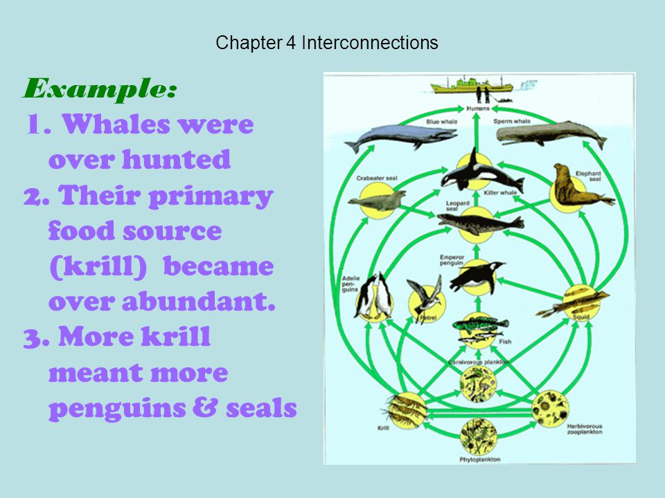 Chapter 4 Interconnections