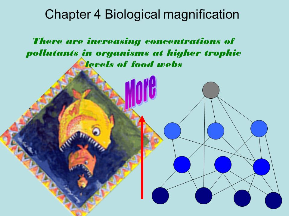 Chapter 4 Biological magnification