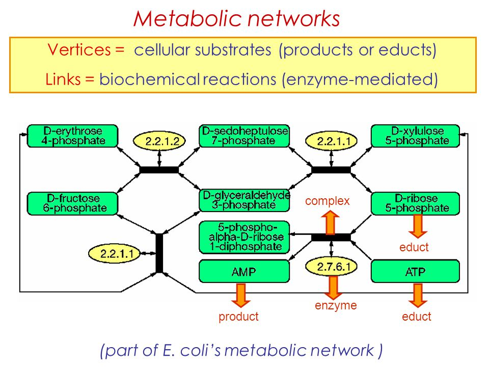 Metabolic networks Vertices = cellular substrates (products or educts)