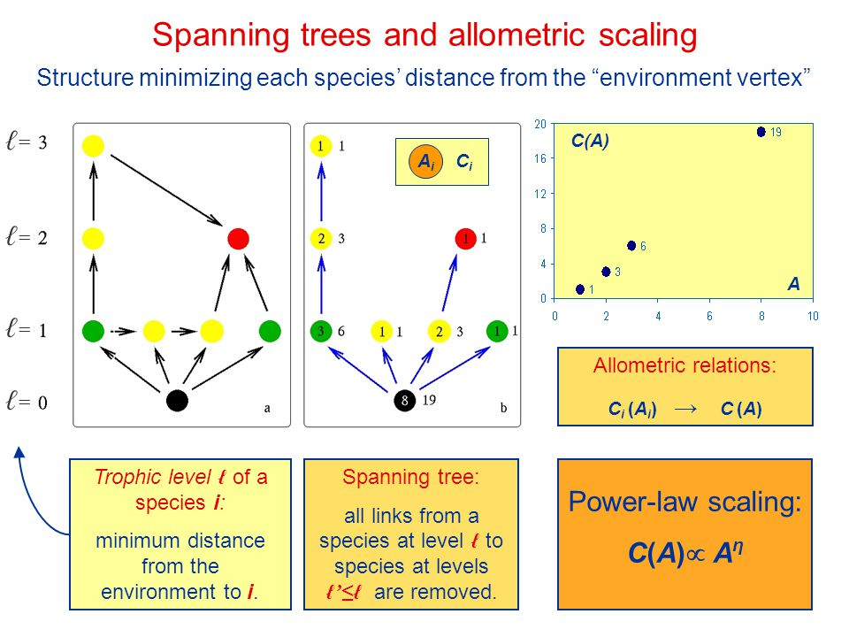 Spanning trees and allometric scaling