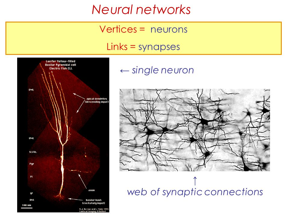 web of synaptic connections